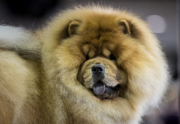 World's Most Dangerous Dog Breeds - Thedelite
